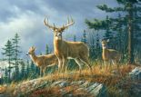 Wizard + Genius Wallpaper Wall Mural 00151 Autumn Whitetails By Colemans